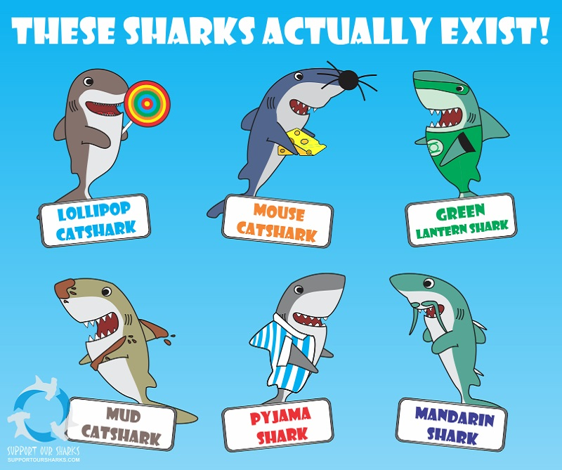 these sharks actually exist   shark cartoons by support