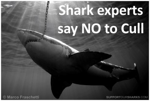 Shark Experts Say NO To Cull in WA
