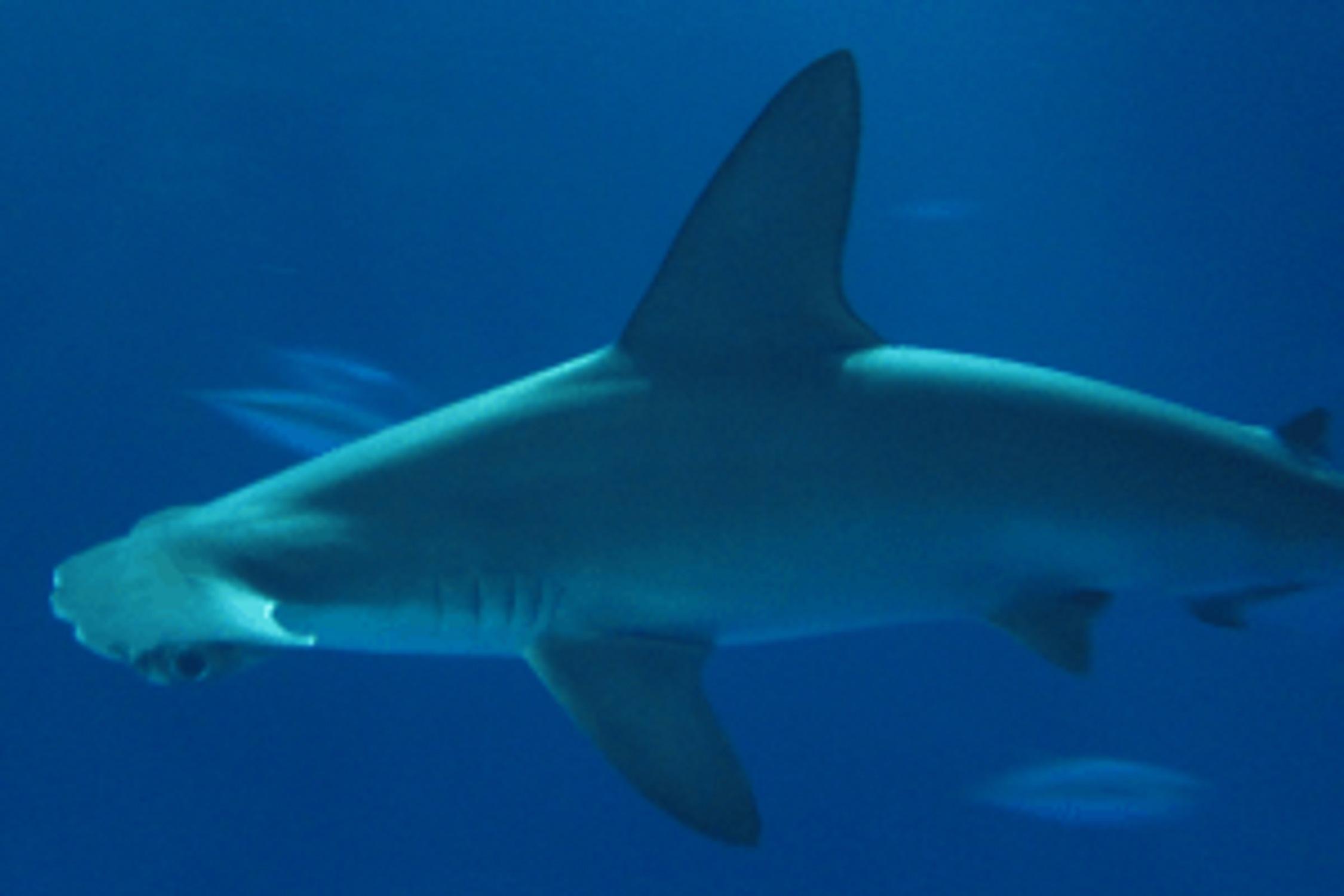 Shark Anatomy Quiz