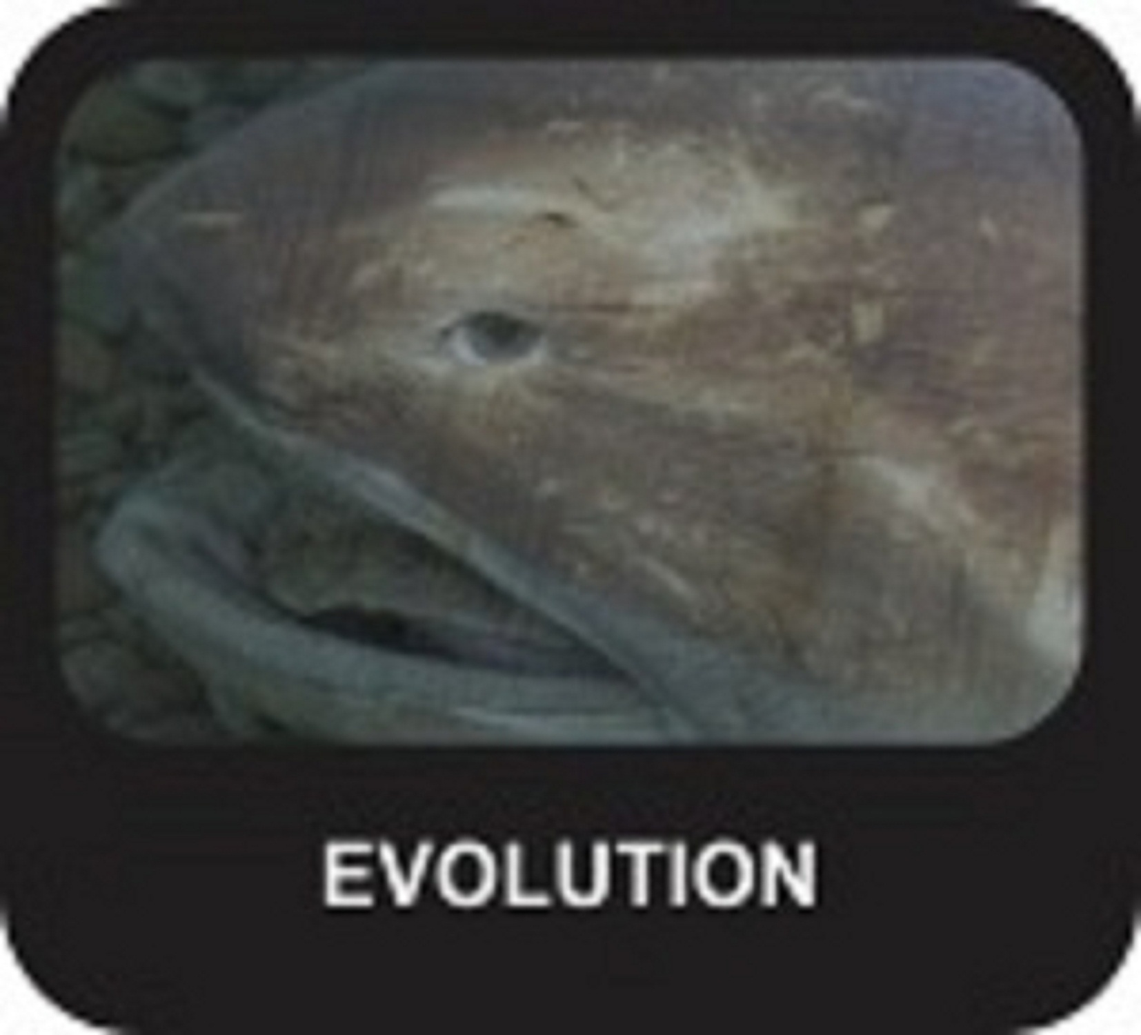 the history and evolution of sharks Sharks are one of evolution's most enduring success stories although they have few hard parts that can survive the insults of geologic time, sharks have left a long and rich fossil record some 2,000 to 3,000 species of fossil shark have been described.