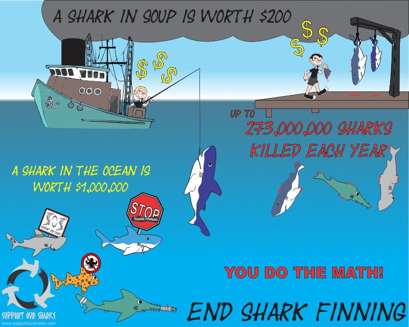End Shark Finning - Shark cartoons by Support Our Sharks
